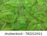 Close Up Abstract Green...