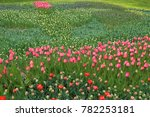 spring field of blooming tulips. | Shutterstock . vector #782253181