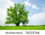 Solitary tree in the summer on a fine day - stock photo