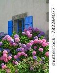 blue window with floral garden  ... | Shutterstock . vector #782264077