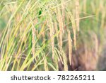 an organic asian golden rice... | Shutterstock . vector #782265211