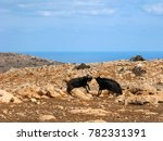 Greece. Wild Landscape Of Cret...
