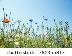 wildflower meadow  newchurch... | Shutterstock . vector #782355817