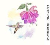 hummingbird and fuchsia flower... | Shutterstock . vector #782428795
