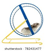 Stock photo hamster on a wheel isolated 782431477