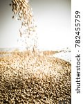 falling pilsner malt beer grain ... | Shutterstock . vector #782455759