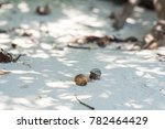 2hermit Crab Walking On The...