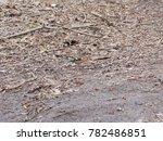 redbreast  erithacus rubecula ... | Shutterstock . vector #782486851