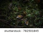 monarch butterfly hibernation... | Shutterstock . vector #782501845
