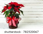 Red Poinsettia  Christmas...