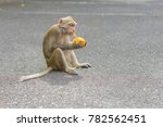 monkey eating an orange. | Shutterstock . vector #782562451