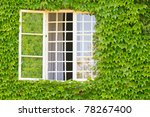 Evergreen Foliage Surrounding A ...