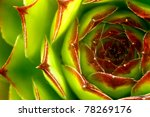 Abstract Image of green sempervivum plant. - stock photo