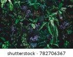 beautiful nature background of... | Shutterstock . vector #782706367