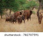 Family Of Elephants Close Up