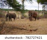 Family Of Elephants N In Africa