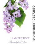 beautiful lilac isolated on... | Shutterstock . vector #78272890