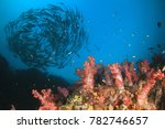 schooling jack fish on coral... | Shutterstock . vector #782746657