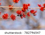 spring maple blossoms | Shutterstock . vector #782796547