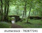 doorway and path in the woods ... | Shutterstock . vector #782877241