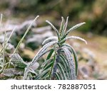 A Frosty Growth