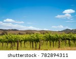 vineyards raw with blue sky in... | Shutterstock . vector #782894311