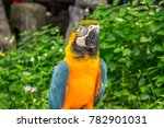 yellow and blue parrot on the... | Shutterstock . vector #782901031