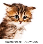 Stock photo cute little siberian kitten isolated on white background 78294205