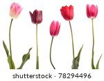different color tulips isolated ... | Shutterstock . vector #78294496