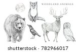 scandinavian forest animals set.... | Shutterstock . vector #782966017