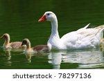 Aquatick Birds