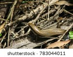 lizard snake wildlife    Shutterstock . vector #783044011