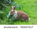 Stock photo rabbit sitting on meadow eating green leaf close up bunny rabbit eating on farm garden 783047617