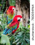 macaw bird on tree  thailand. | Shutterstock . vector #783054964