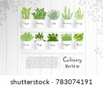 flat design culinary herbs such ... | Shutterstock .eps vector #783074191