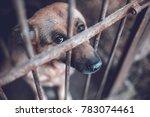 a big sad shepherd in an old... | Shutterstock . vector #783074461
