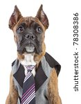 germany boxer in waistcoat and... | Shutterstock . vector #78308386
