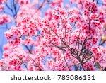 choose soft focus  beautiful... | Shutterstock . vector #783086131