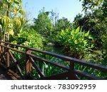 green paradise in thailand   Shutterstock . vector #783092959
