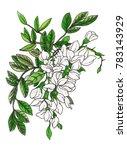 white acacia branch blossom.... | Shutterstock . vector #783143929