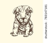 puppy sitting  hand drawn... | Shutterstock .eps vector #783147181