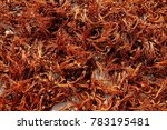 bombax ceiba  cuckoo  cotton... | Shutterstock . vector #783195481