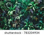 beautiful nature background of... | Shutterstock . vector #783204934