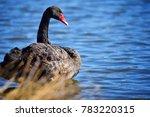 black swan at centennial park ... | Shutterstock . vector #783220315