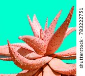 aloe minimal fashion plant... | Shutterstock . vector #783222751