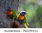 rainbow lorikeet at oatley park ... | Shutterstock . vector #783259111