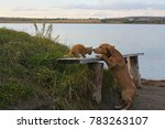 Stock photo dog and cat on the lake shore 783263107