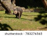 indian rhinoceros in the... | Shutterstock . vector #783276565