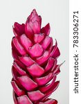 Small photo of Beautiful tropical red ginger (Alpinia purpurat) flower plant on isolate white background.