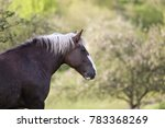 draft horse portrait of a south ... | Shutterstock . vector #783368269